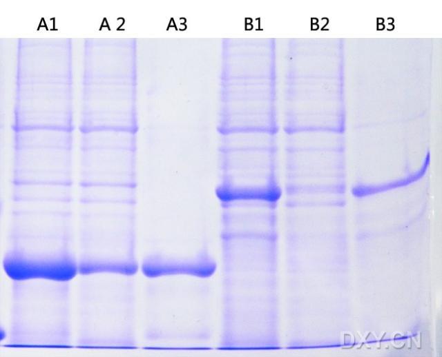 【求助】6his蛋白纯化同样是不挂柱啊!